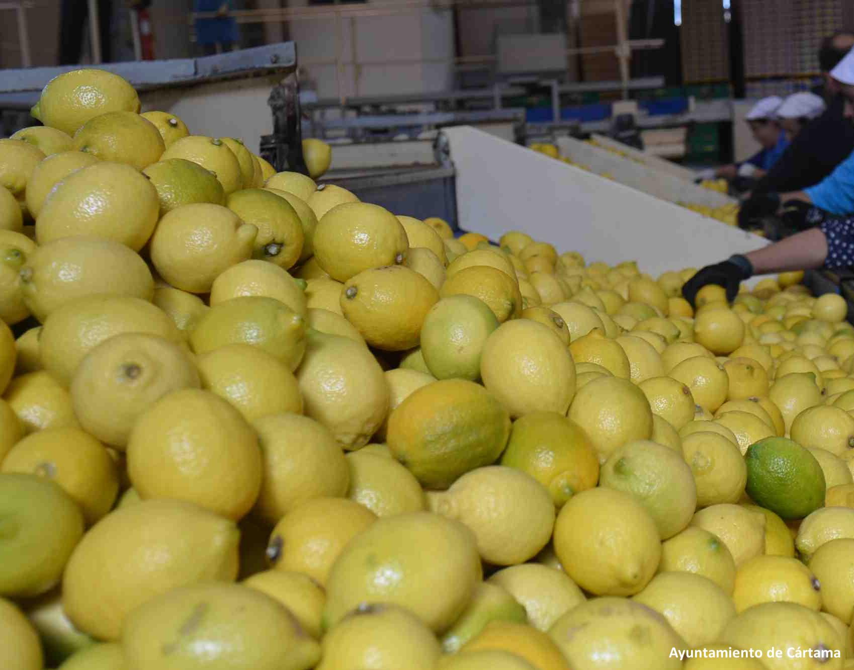 empresa-de-citricos